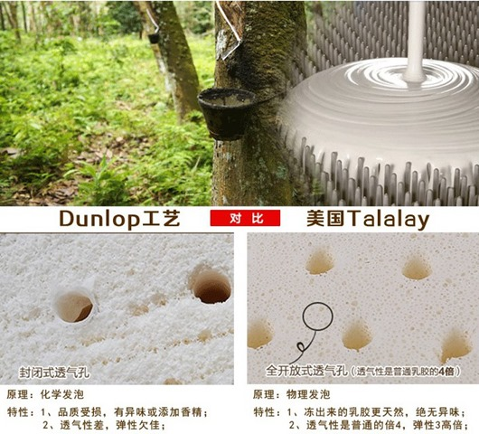 Talalay VS Dounlop